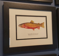 Framed Open Edition Colorado River Cutthroat Trout Print