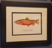 Choose any print, including this Colorado River Cutthroat, from my current print catalog to be sent to each of the three recipients.