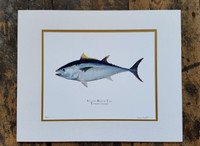 Blufin Tuna (Thunnus thynnus) 16x20 Matted Limited Edition Giclee