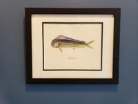WYSIWYG Framed Dolphinfish (Frame Blemish)