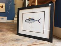 WYSIWYG Framed Bluefin Tuna (Frame Damage)