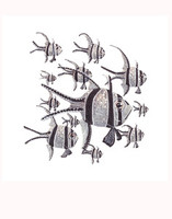 Banggai Cardinalfish Shoal 11x14 Matted Fine Art Print