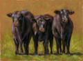 3 Calves