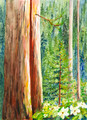Giant Sequoias and Dogwood
