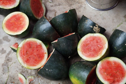 Sugar Baby Watermelon Seeds QTY. 30