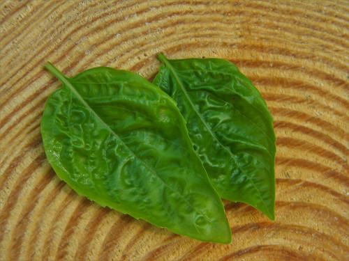 Herb Basil-Sweet Italian Seeds