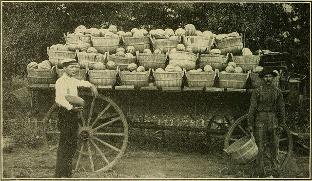 old-farmers-south-ga-seed-co..jpg