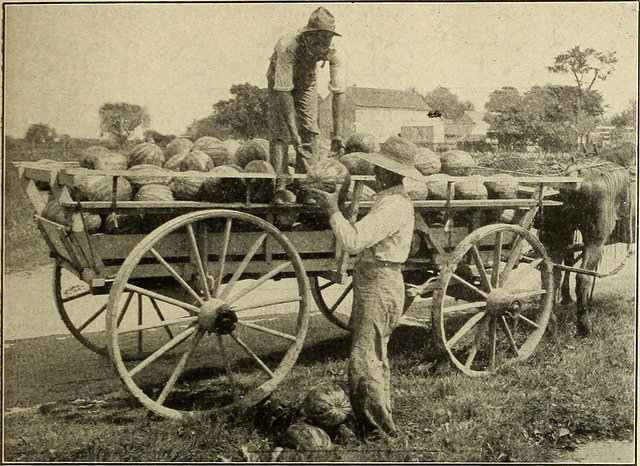 wagon-melons.jpg