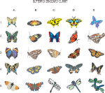 Butterfly/Dragonfly clipart