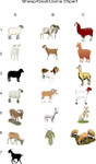 Sheep,Goat. Llama Clipart