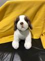 New L/W Plush Pup