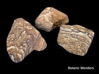 3 Banded Sandstone rocks, Tan colors, very nice!