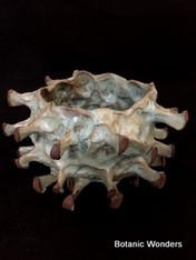 "Buff blue ""Sea Urchin"" style pot, 3.5"" wide opening, 4"" tall."