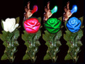 Color Changing Rose with Lite-up Tip by Tora Magic