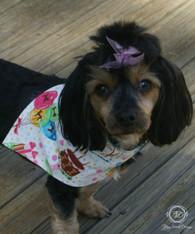 Fall Dog Bandana Collection, Slider Bandana