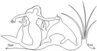 Mermaids brdr