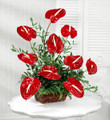Anthurium:10 Stems Arranged