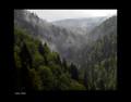 """""""Suma Mist"""" by Croatian Photographer Don Wolf"""