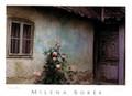 Milena Sorée Award-Winning Poster: CROATIAN ROSE
