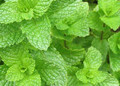 Spearmint Dried Leaves 8oz.
