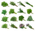 "Fresh Herb Plants By The Tray - 18ct / 4"" pots"