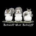 Birdseed? What Birdseed? T-Shirt