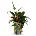 Fresh Plant