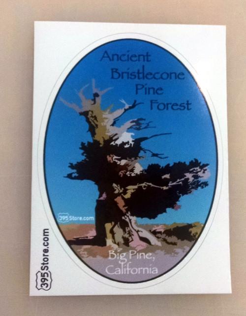 Bristlecone Pine Sticker