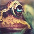 Toad-Toad-'71 Swiss Hard Rock,Prog Rock-NEW LP AKARMA