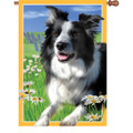 Lacey the Border Collie : Illuminated Flags