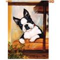 Boston Terrier :     House Brilliance