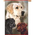 Labrador Retrievers :     House Brilliance