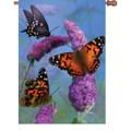 Beautiful Butterflies :     House Brilliance
