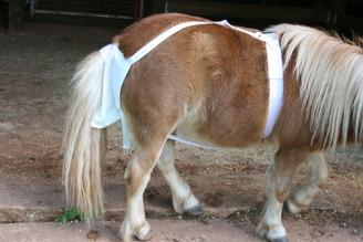 Mini HorseFeathers' Service Diaper
