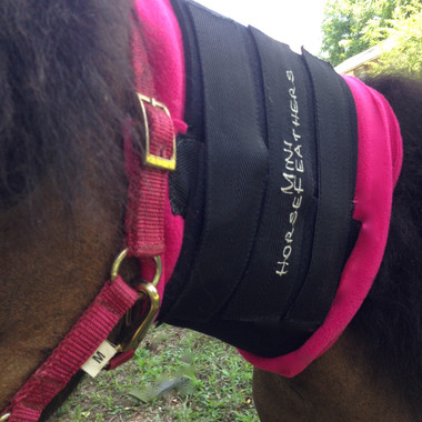 "Top Trainers agree Mini HorseFeathers manufactures the best neck wraps available. ""Soaking with sweat these wraps wick off moisture maximizing the effect of refining and conditioning an important part of your mini's crowning features, a beautiful neck."