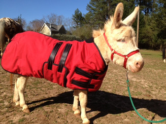 Specialized Fit for Mini Donkeys