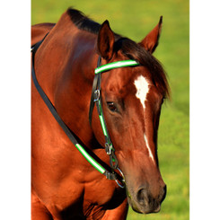 WESTERN BRIDLE (Full Browband) made with REFLECTIVE DAY GLO Biothane