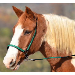 GROOMING HALTER & LEAD made from BETA BIOTHANE (Any 2 COLOR COMBO)