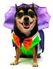 Dogula Vampire Costume