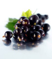 Royal Black Currant