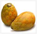 Marigold & Cactus Fruit