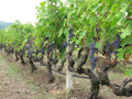 Hawthorn Berry Grape Leaf Herbal