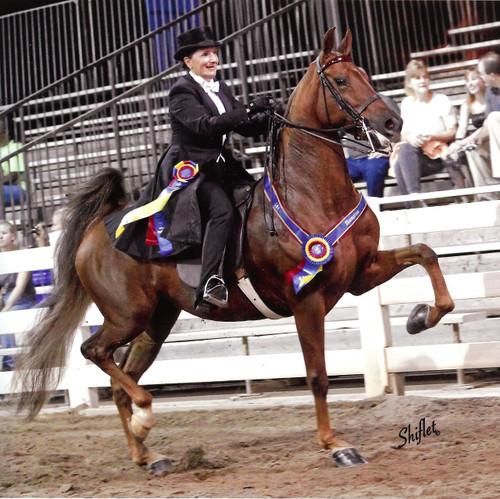 Saddle Seat Rental Suit. 3 piece or Formal.  Shadbelly Rental