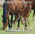 Mare / Foal Program