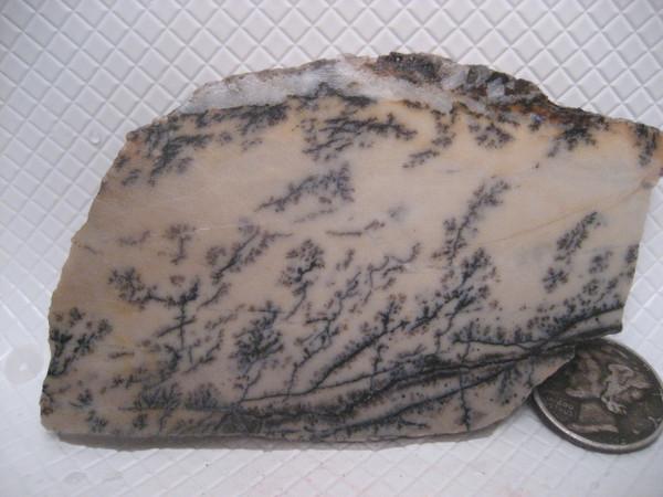 Dendritic Limestone*