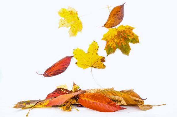 autumn-1379061894ilc.jpg
