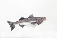"Plush 10"" Striped Bass"