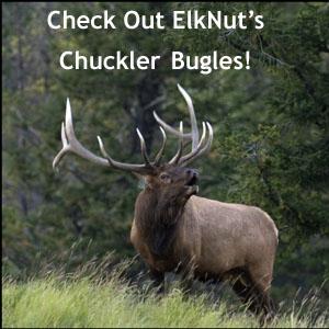 Bull Elk Chuckling