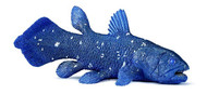 Coelacanth by Wild Safari