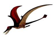 Rhamphorhynchus by Wild Safari